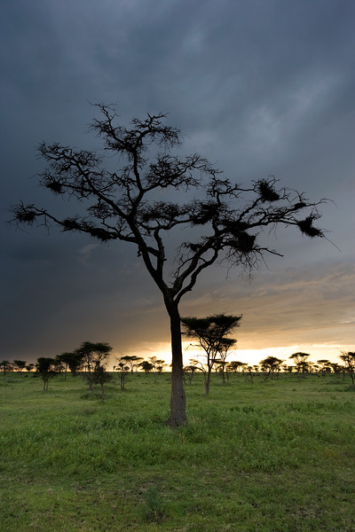 Dusk - Serengeti National Park, Tanzania