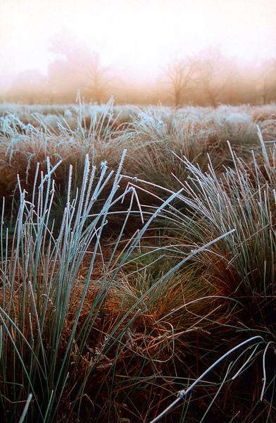 Winter morning - Richmond Park, UK