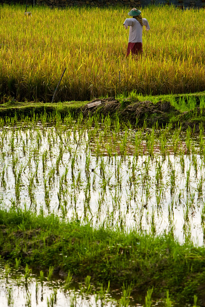 Rice field - Langkawi, Malaysia