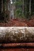 Logging - Cameroon