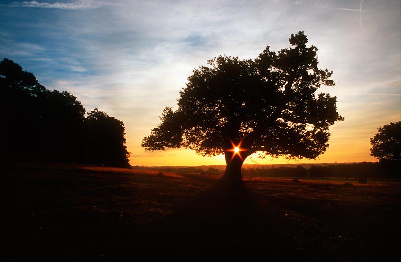 Sunrise - Richmond Park, UK