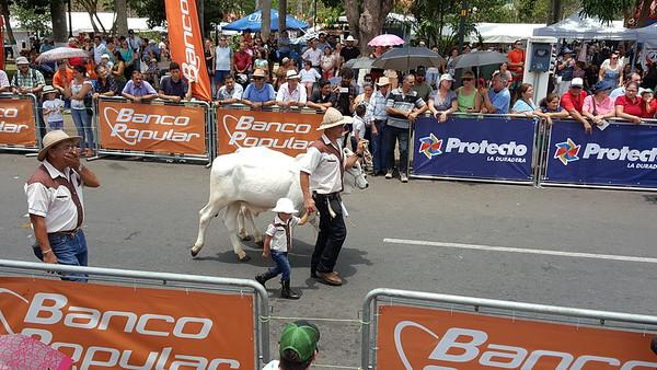 Oxcart Parade 2018, Atenas, Costa Rica