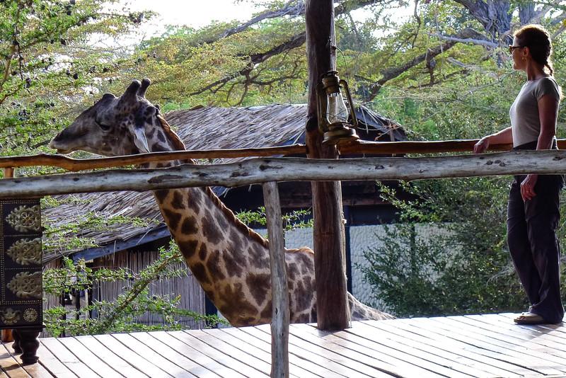 Girafe at Impala Camp, Selous Reserve