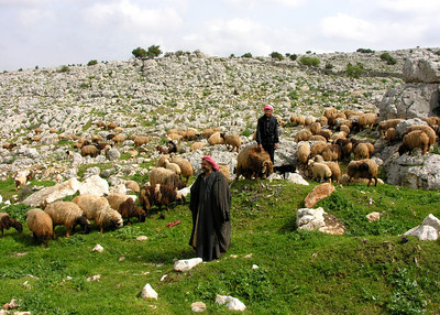 APAMEA - SYRIA