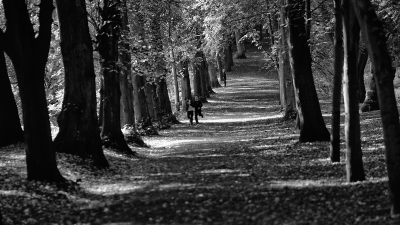 Boys Running - Hampstead Heath - London (October 2013)