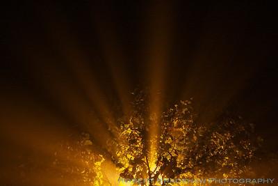 November 30, 2011 Late night fog in Palo Alto