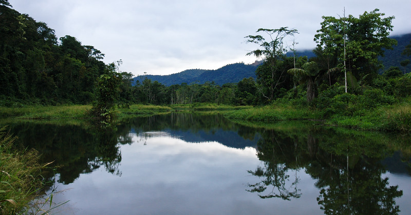 Amazon Rainforest - Southwestern Region<br /> Manu, Peru