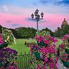 Розовые ночи питерского лета