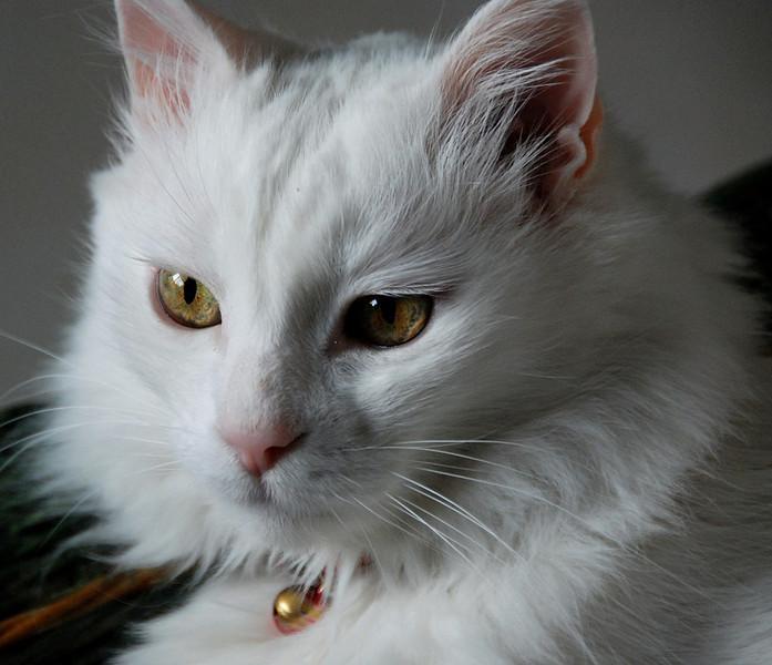 THE ANKARA CAT 1