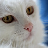 THE ANKARA CAT 3