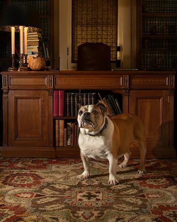 """HAMMY"", the Judge's dog."