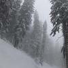 """Forêt de Tamié ; quand la neige est en vallée, une qualité de ski en forêt inégalée. Mais chut, """"secret spot""""..."""