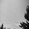 Les vautours ne sont pas encore vraiment présent dans le massif des Bauges, mais le survolent fréquemment.