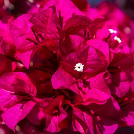 Peekaboo Bloom