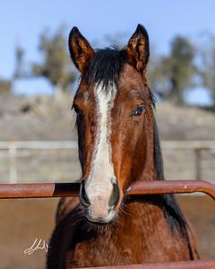 Jody Jones Performance Horses