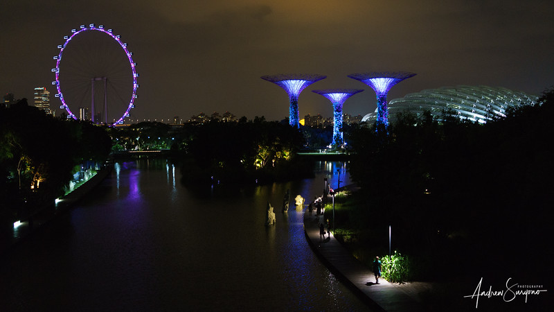 Night Atmosphere at Gardens by The Bay
