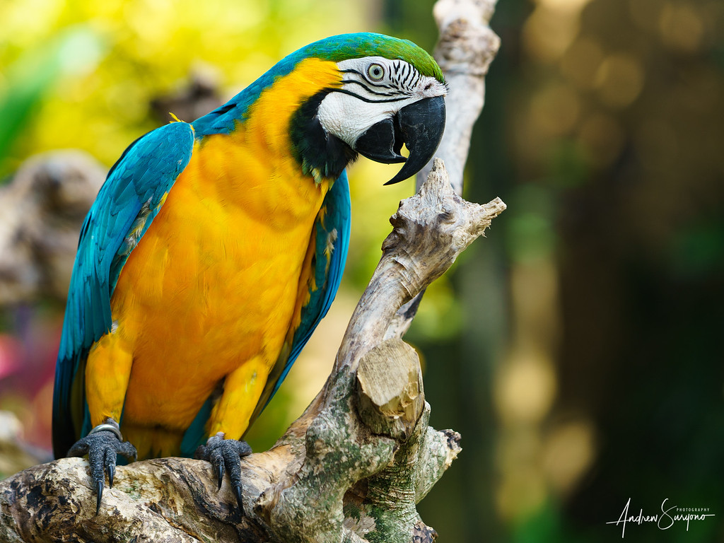 Parrot Perch