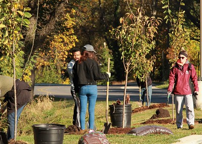 11.5.2016 Tree Planting with Catonsville Tree Canopy Project