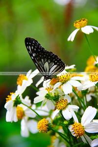 Simply Butterflies CC, Bilar, Bohol, Philippines [EXPLORE Feb 29 2012]