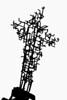 The stylized cross at an old Taybet Zaman church, Jordan.
