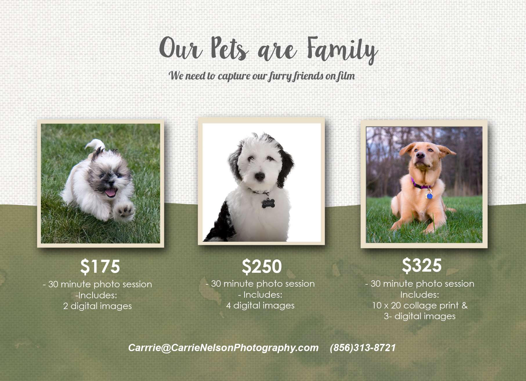 Pet Photography sessions 2015