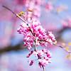 Pink _94A7195