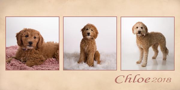 20X30 pano- Puppy Plan Chloe FINAL