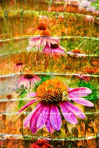 Field of flowers.  Photo montage:  used two photos again, flowers and bark.  Blend modes applied at different opacities.