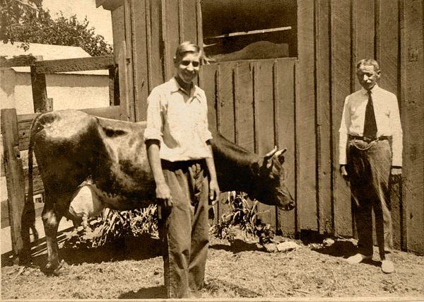 Georgie Yammer and Dad With Their Great Cow - July 1919