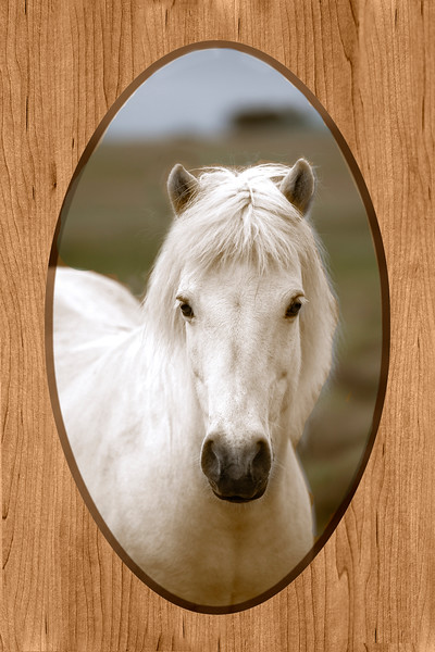 WHITE HORSE AFTER