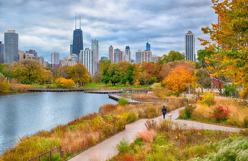 Autumn Dog Walk in Lincoln Park 2020 Update - John O'Neill