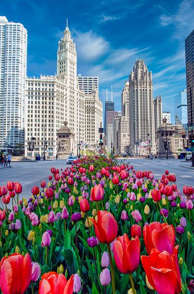 Tulips Down the Avenue - V - John O'Neill Photography