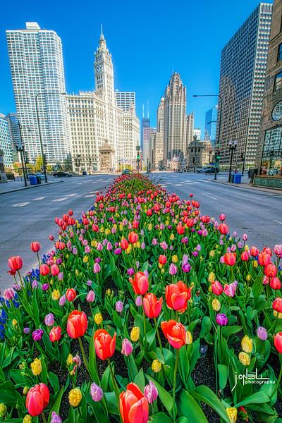 Tulips Down the Avenue - V2 - WM - John O'Neill Photography