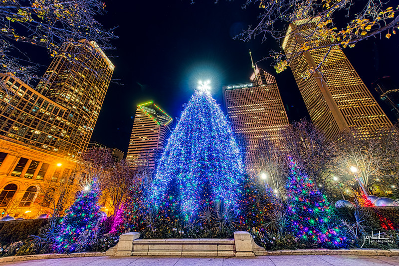 Chicago Tree 2020 WM - John O'Neill Photo