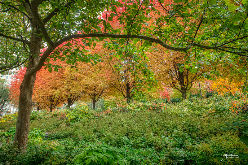Autumn Hillside WM - John O'Neill Photography