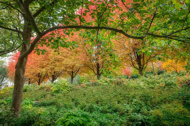 Autumn Hillside - John O'Neill Photography