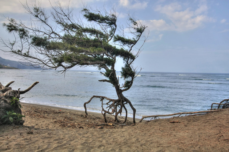 NOV 17 2012<br /> The walking tree, Maybe out jogging.<br /> Have a fun weekend. Little of Hawaii