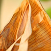 DEC 22 2012<br /> Dead Banana Leaf.<br /> From the back yard,