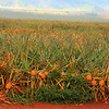 Dec 7 2012<br /> Dole Pineapple.<br /> Have a safe and productive day.