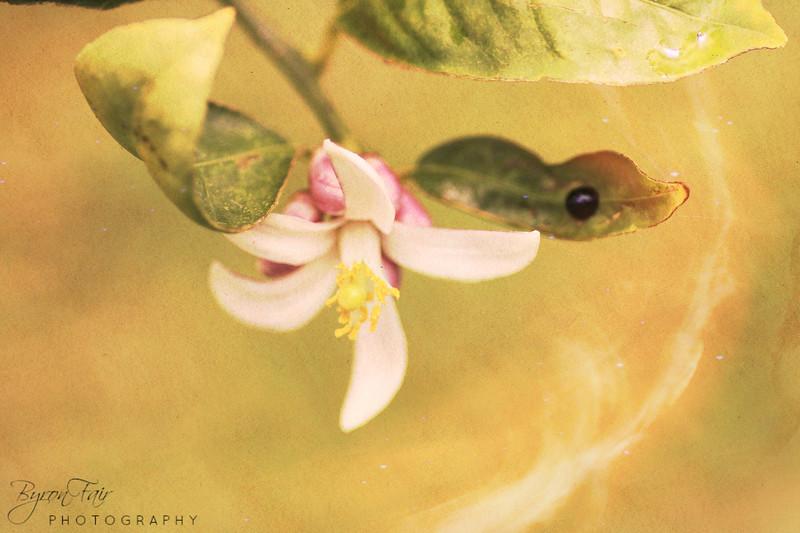 Photograph Art