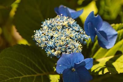 Flowers - by Byron
