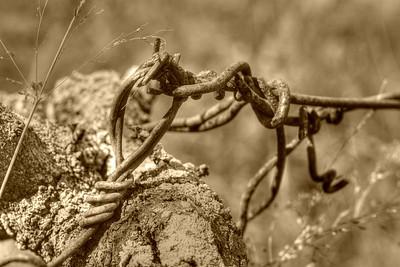 Photo Art Sepia Barb Wire