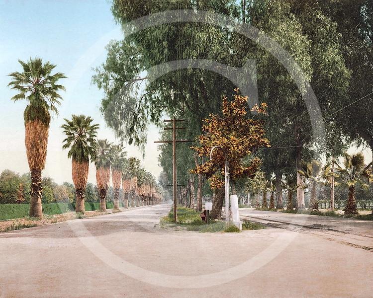 Magnolia Avenue, Riverside, California 1901.