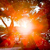 """This is a photograph I took of the sun setting in my front yard, on the evening of August 12, 2019.  This date marked the close of the """"Lion's Gate Portal,""""  which is a time of increased cosmic energy flowing between the physical and spiritual realms. The Lion's Gate energy for 2019 opened up July 26th - August 12th, with the peak of energy on August 8th (8:8).<br /> <br /> Spirit told me that the Light emanating from the sun in this photograph represented the Lion's mane and contained codes for our ascension. <br /> <br /> The Lion's Gate has ties to ancient Egypt and for thousands of years has been observed and honored as a time of a great energetic influx and activation.<br /> <br /> This gateway is marked by an alignment between the Earth and the star Sirius. As Sirius rises in the sky, Orions Belt directly aligns with the Pyramid of Giza, and from our perspective on Earth, it appears that Sirius (the brightest star we can see) comes closer to the Earth.<br /> <br /> It's called the Lion's Gate, or Lion's Gateway because it occurs in the astrological sign of Leo (the Lion). As a Zodiac Sign, Leo is associated with the heart center and represents the individualized expression of the Divine.<br /> <br /> The Leo energy is the perfect stage to anchor the ascension codes and energies of higher consciousness broadcast through the star Sirius and through the Great Central Sun."""
