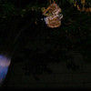 This is a still image of The Light of Jesus; as captured on video the evening of May 15, 2014.