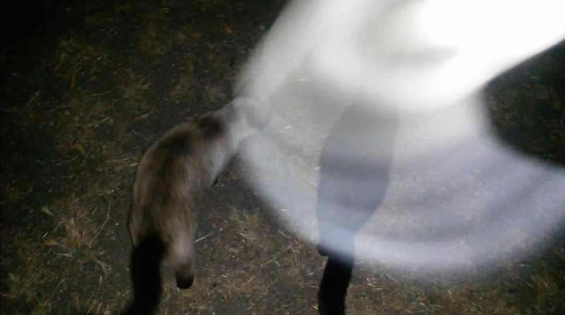 This is the third still image, of five images presented, of Archangel Raphael visiting me and my cats on the evening of June 14, 2016.