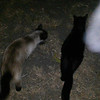 This is the fourth still image, of five images presented, of Archangel Raphael visiting me and my cats on the evening of June 14, 2016.