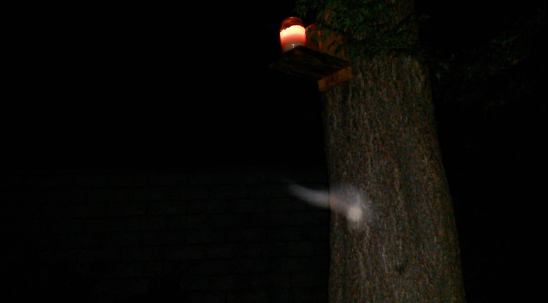 This is the third and final still image of The Light of Archangel Ariel captured on video the evening of June 11, 2014. In this image, Ariel has morphed into the shape of an orb with a misty trail of Light behind her.