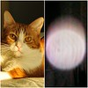 A side-by-side image of my cat, Canoodle, and his Spirit Light.
