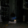 This is a still image of The Light of Jesus brushing over my cat Boo Boo; as captured on video the evening of July 31, 2017.